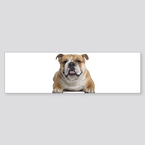 Cute Bulldog Bumper Sticker